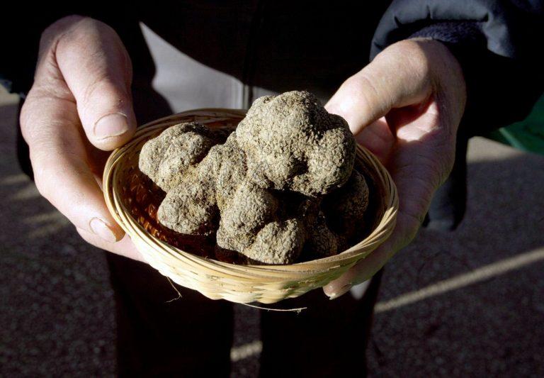 trufas perigord truffles